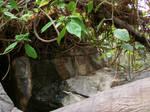 Jungle Habitat1