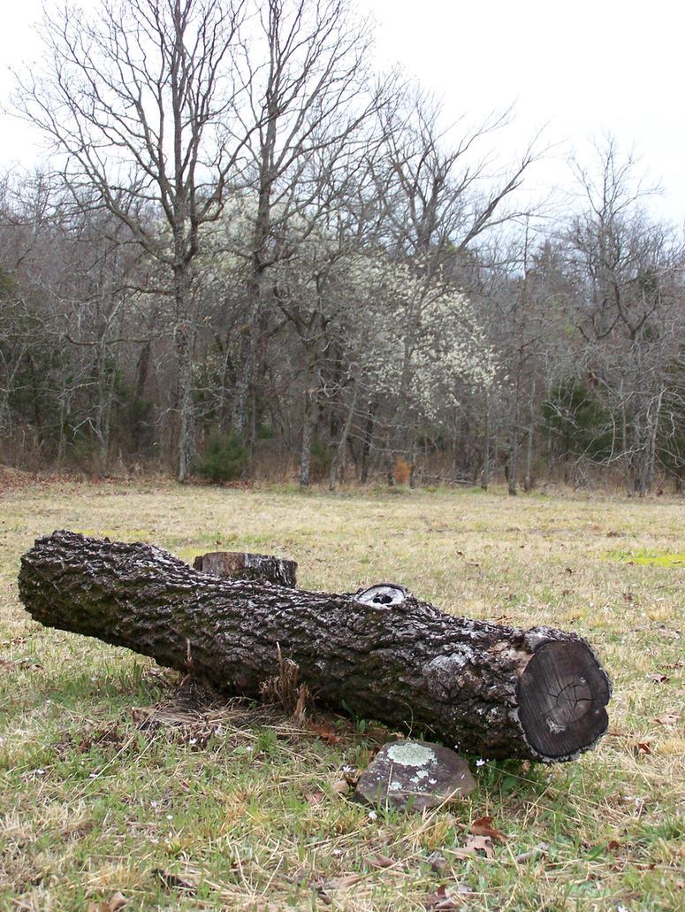 Fallen Log3 by effing-stock
