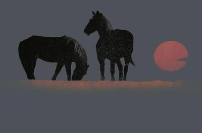 Horses at sundown by finkybeatnik
