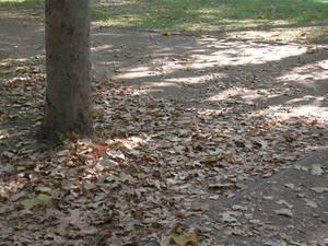 Tree - Arbol