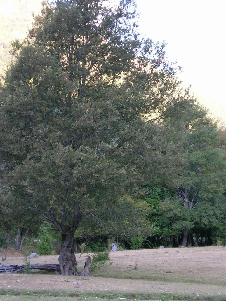 Tree by ephedrina-stock