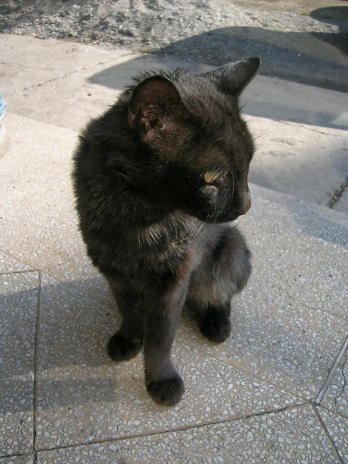 Black Cat by ephedrina-stock