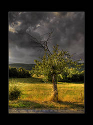 Tree before storm by Elly0001