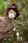 Ophrys Merle
