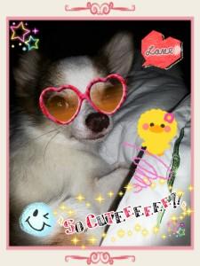 jikadi's Profile Picture
