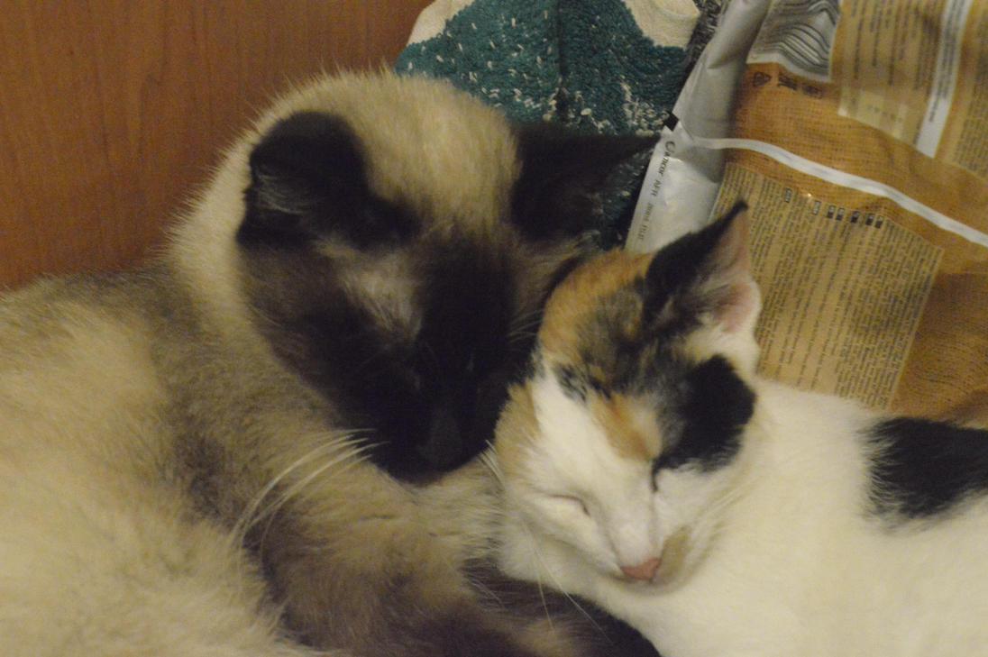 Rexy and Vidra by Blind-Raccoon