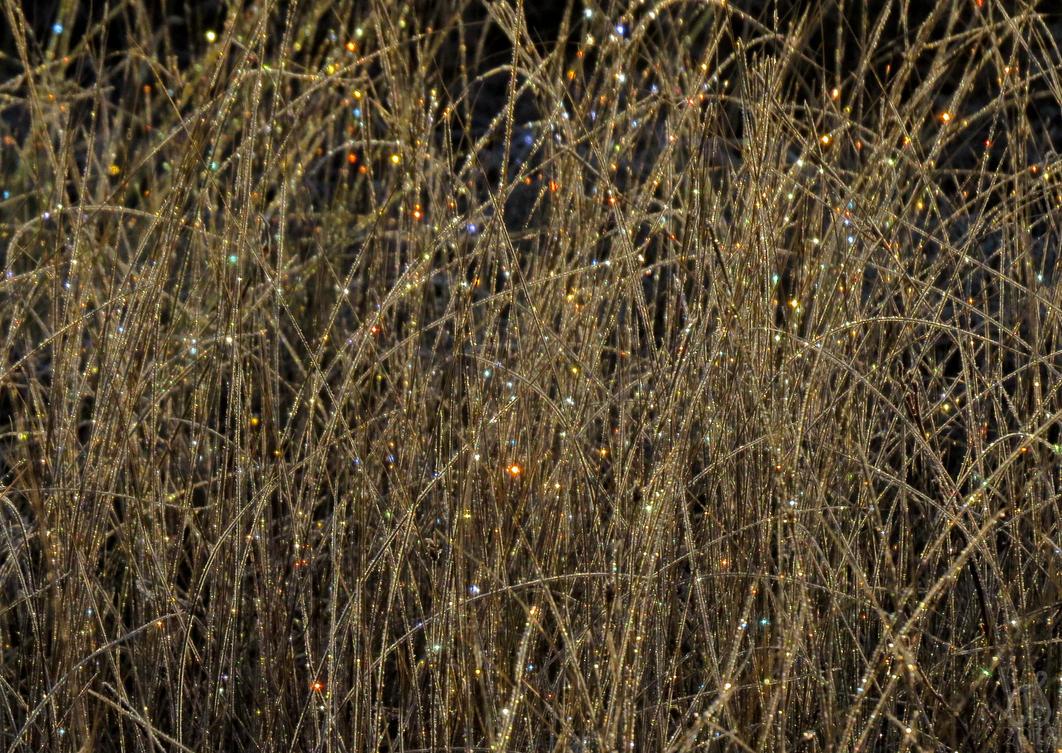 Fairy Lights by Tessasa