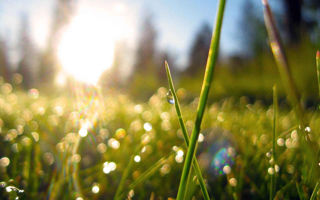 Morning Dew 2 by nemesis158