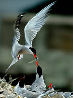 The Love is Share by VolkanAkgul