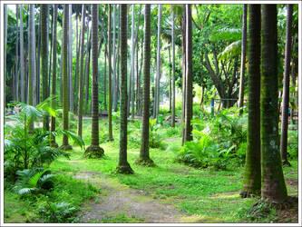Palmtree Jungle by bbcl