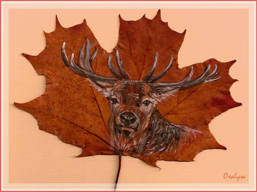 Deer by oxalysa