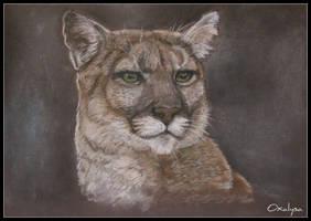 Puma by oxalysa