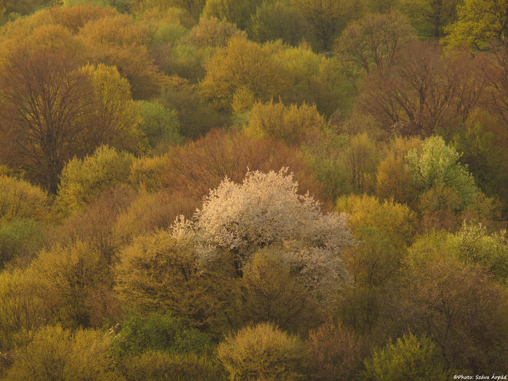 Spring 0001 by Goppo713