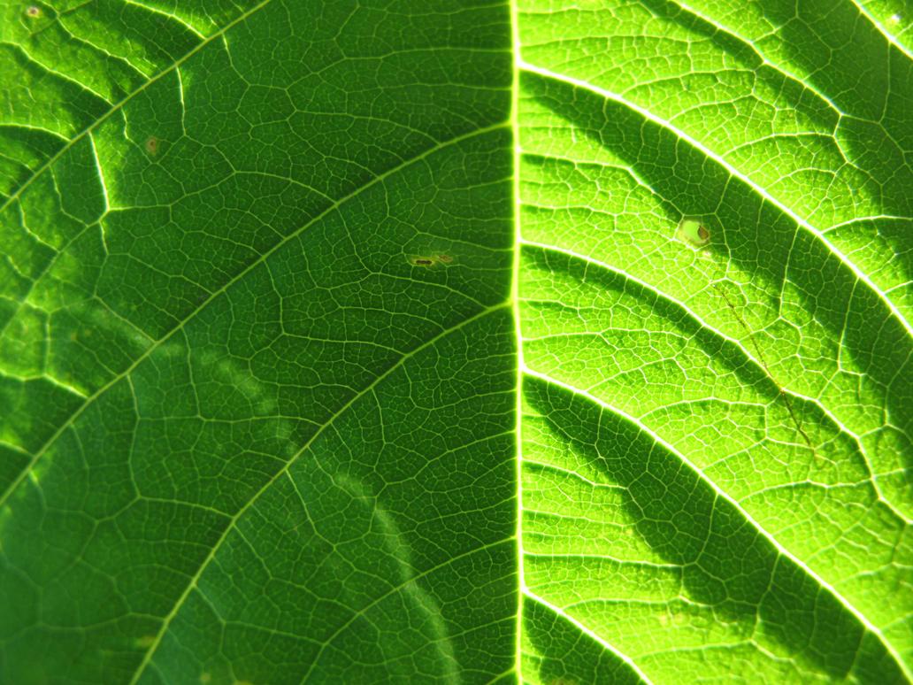 Leaf 15 by Goppo713