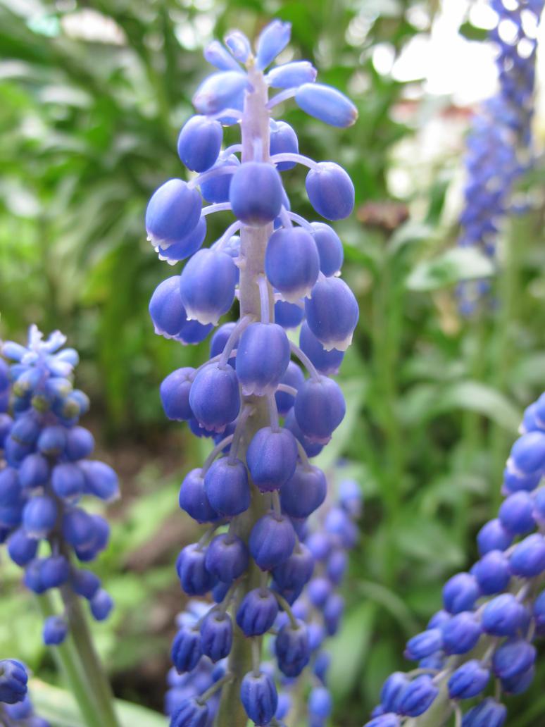 Flower 15 by Goppo713