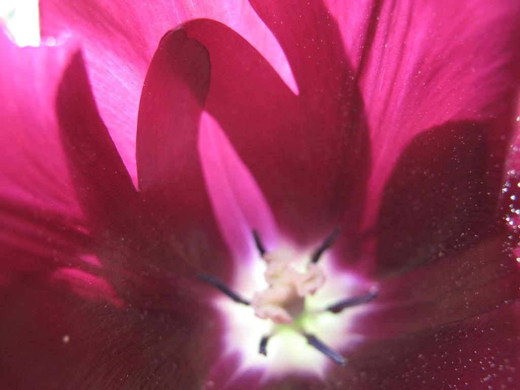Flower 16 by Goppo713