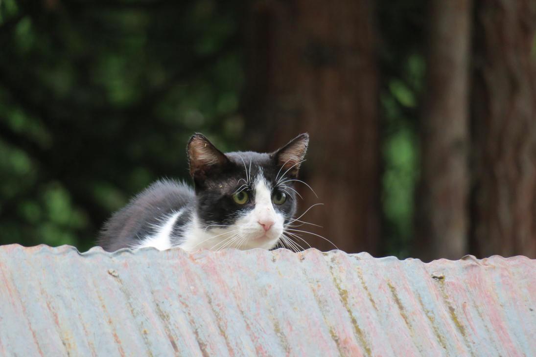 Cat 01 by Goppo713