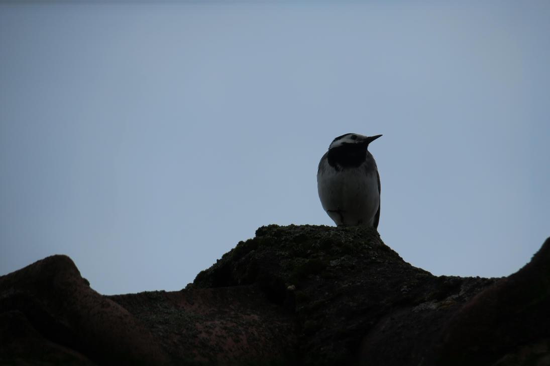 Bird 25 by Goppo713