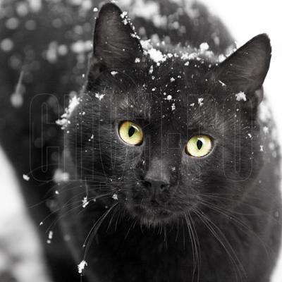 cnya's Profile Picture