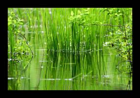 Green by BalchPhoto