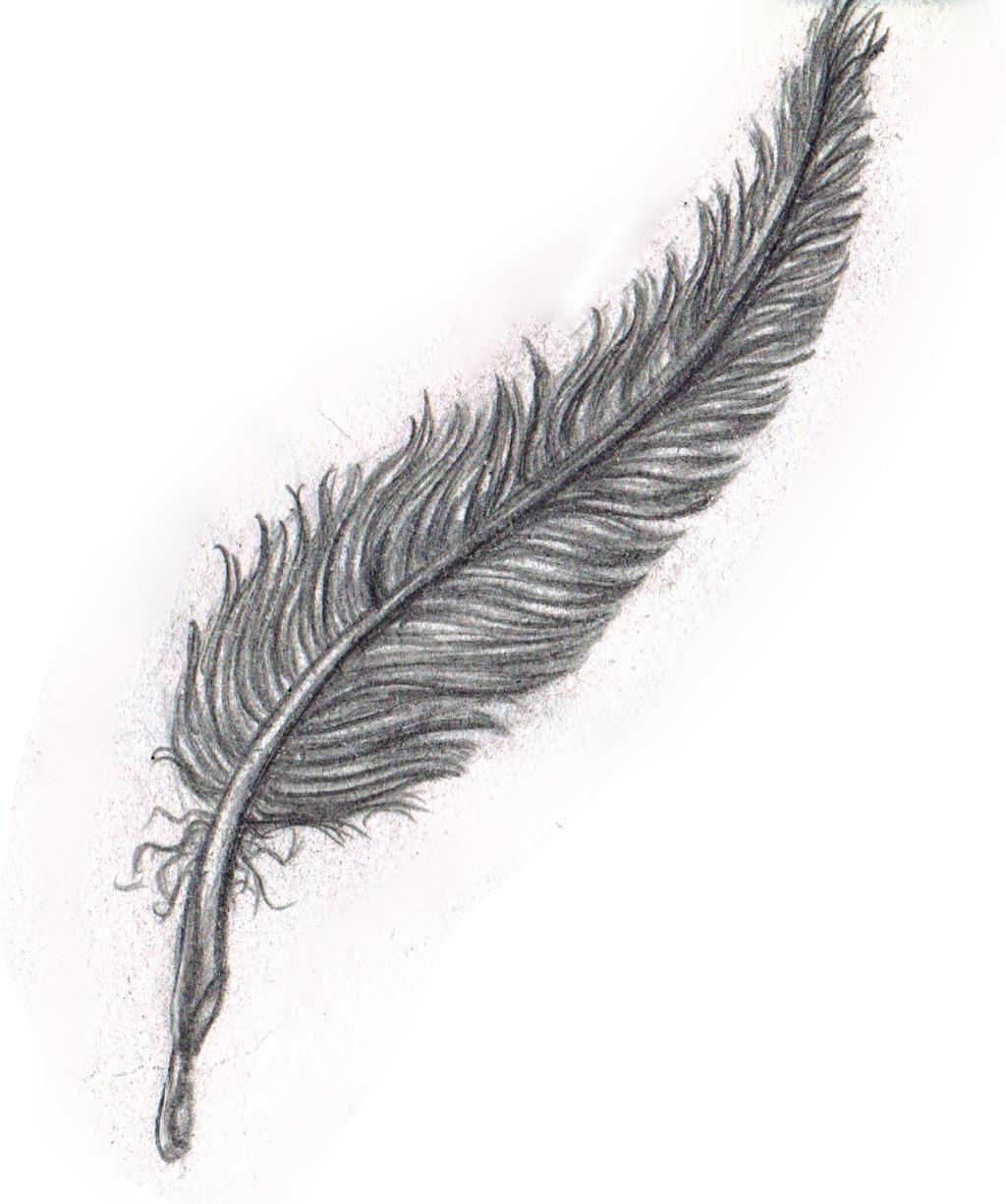 Eagle Feather Pencil Drawing Eagle featherEagle Feather Pencil Drawing