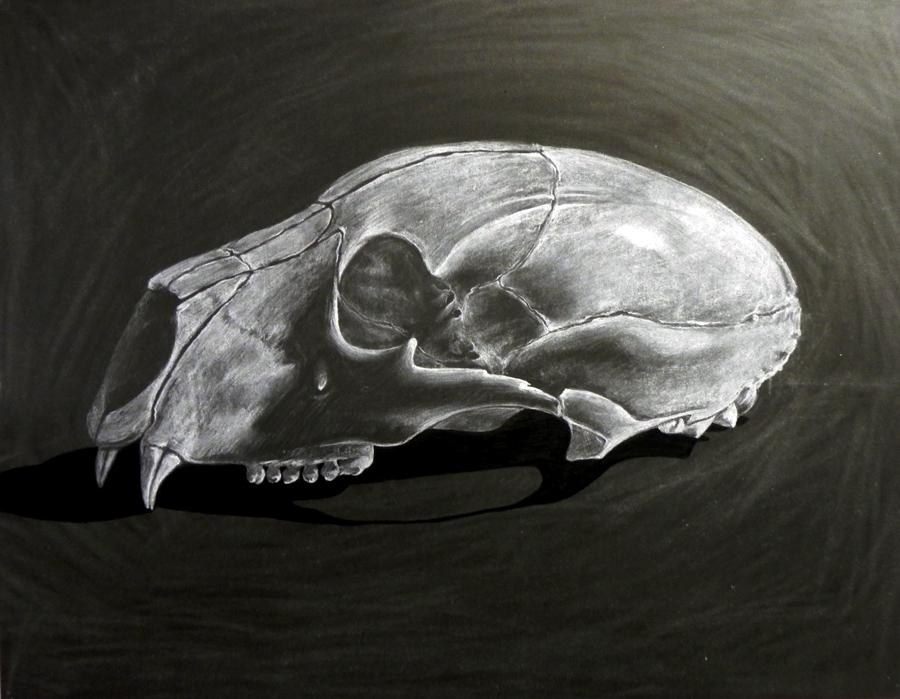 Bear Skull Drawing Bear Skull by Kiqo7 on...