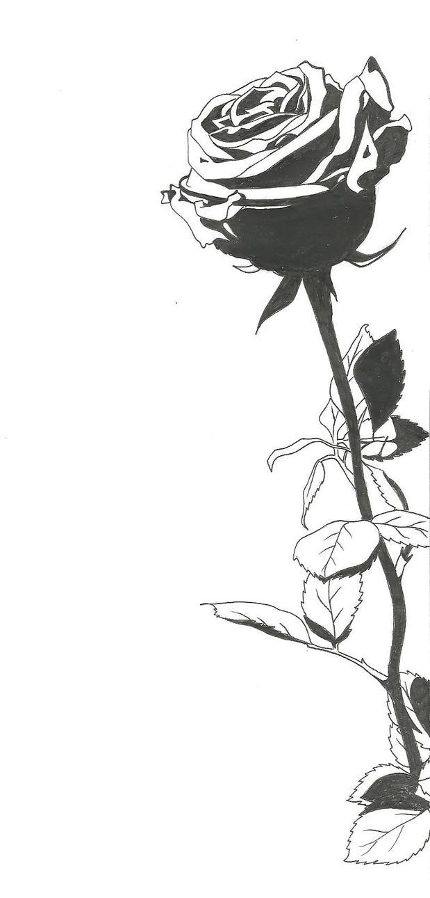 Rose by YumeNoJidai