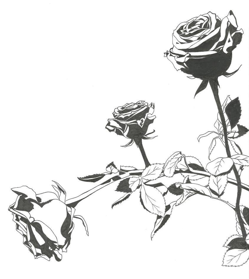 Roses by YumeNoJidai