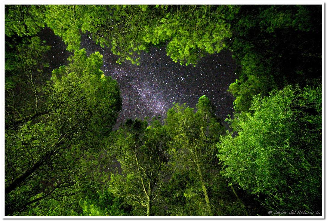 Bosque estrellado - Starry forest by Khaotico