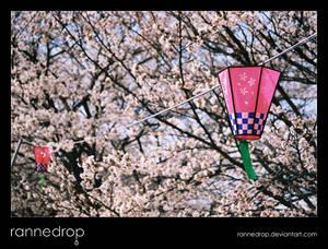Hanami Lanterns At Yuyu Park