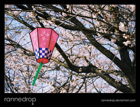 Hanami Lanterns At Yuyu Park 2