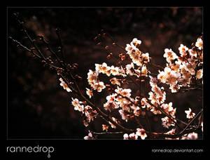Evening Plum Blossoms