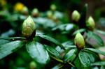 Damp flower