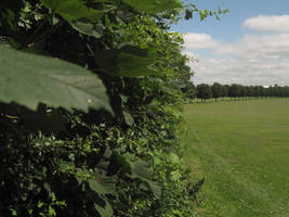 Doncaster Town Fields 2