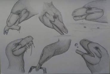 Dromaeosauridae part2
