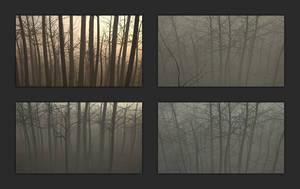 Forest fog study