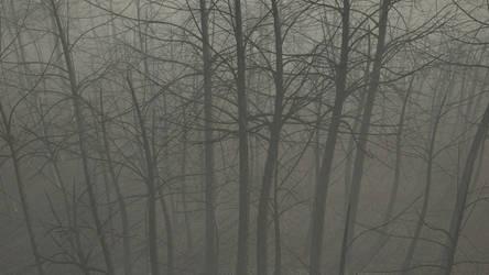 Forest fog study bottom right