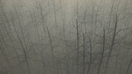 Forest fog study new camera