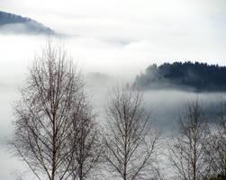 Fog by MayaVogrin