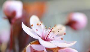 Spring Bloom by MayaVogrin