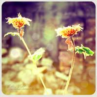 Flower 1 by screemgirl