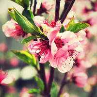 Flower by screemgirl