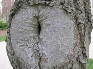 butt...crack?