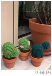 Cactus :D