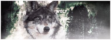 wolf by Aleksandar95design