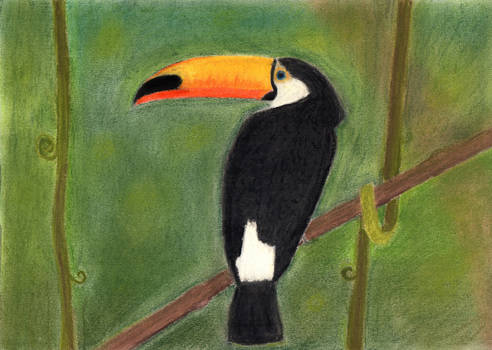 Toucan (finished)