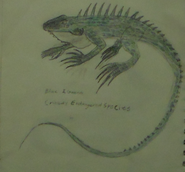 Blue Iguana Drawing by huggiebear234
