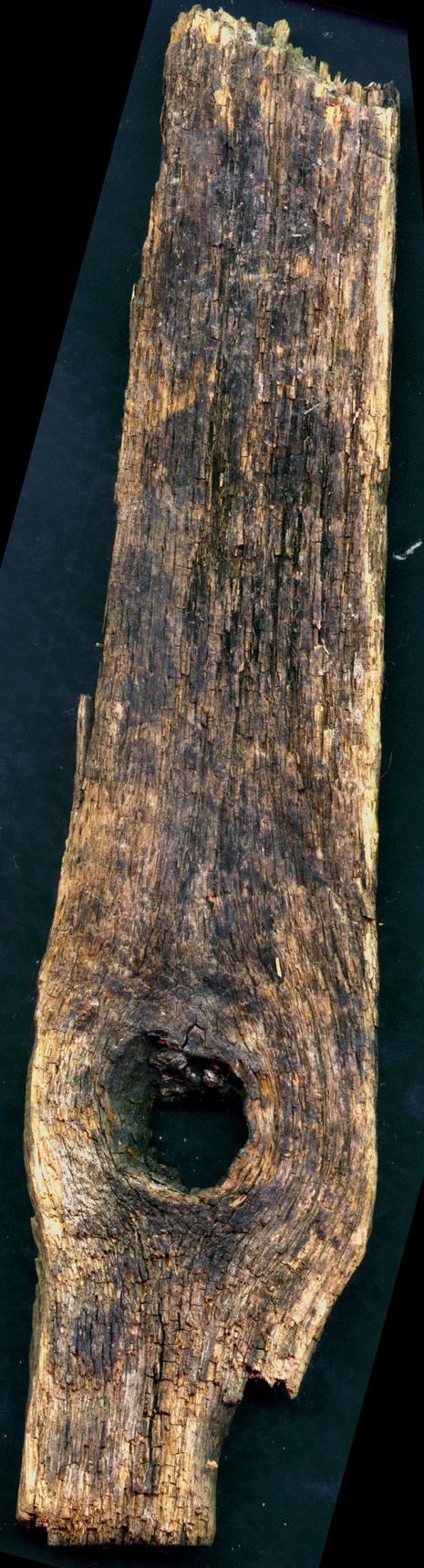 ars-driftwood2 by ars-natura