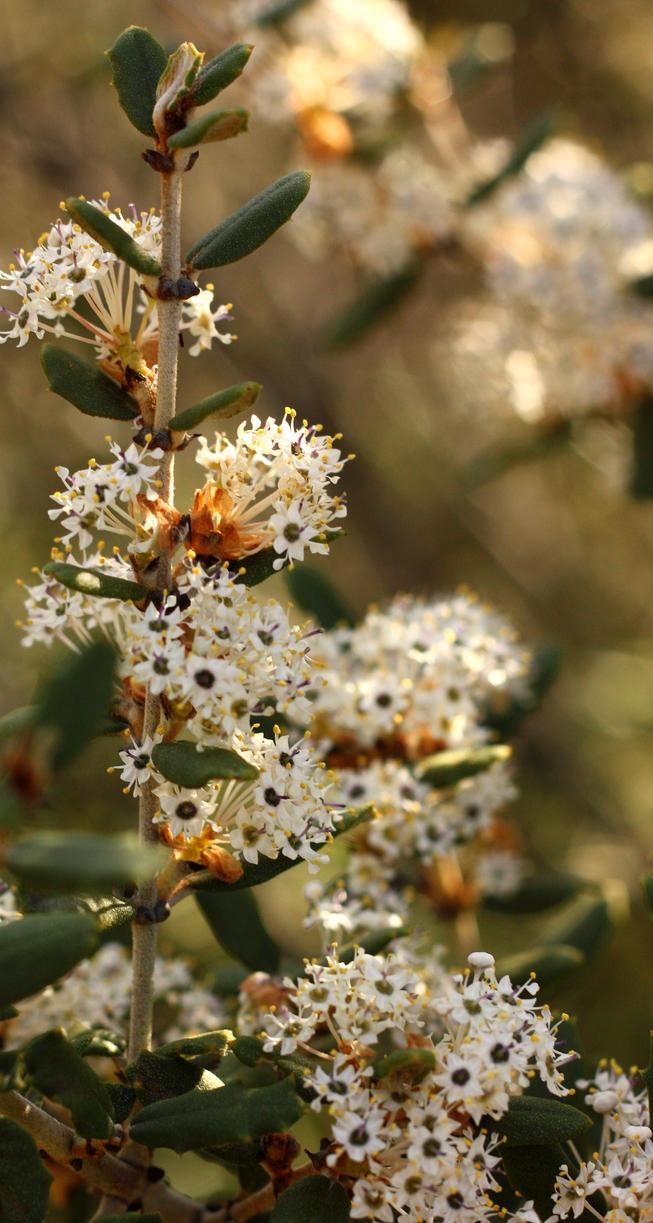 Wild Flower 3 by pinknfuzzy4711