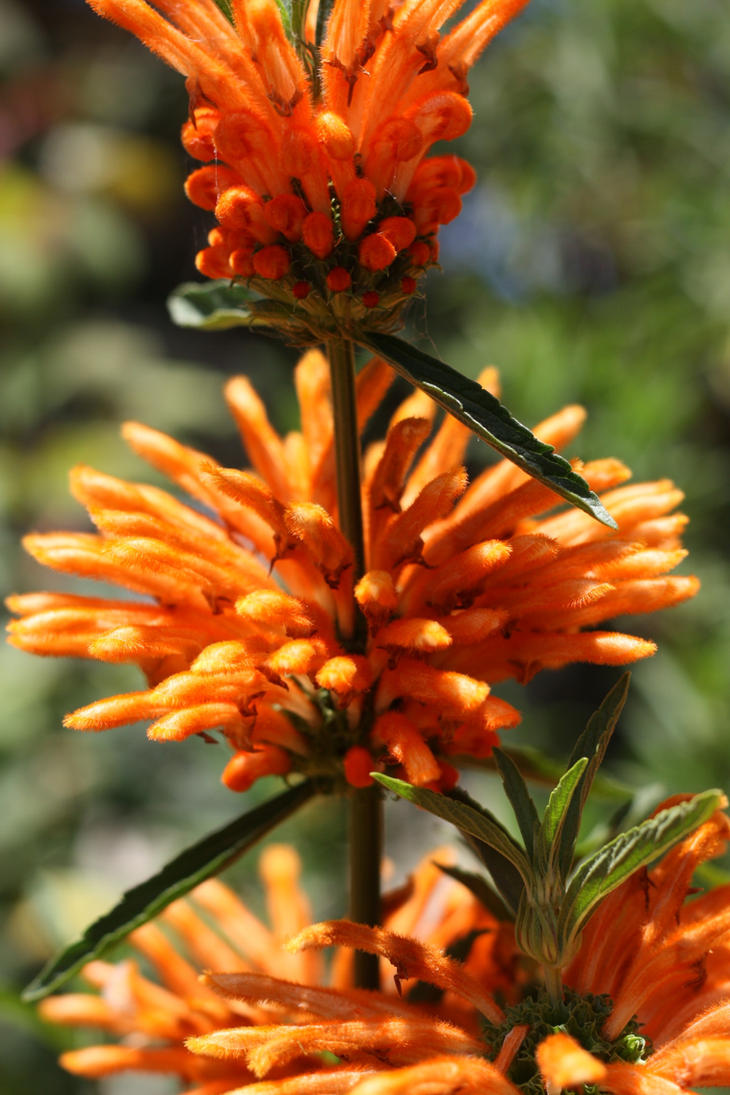 Orange Flowers by pinknfuzzy4711